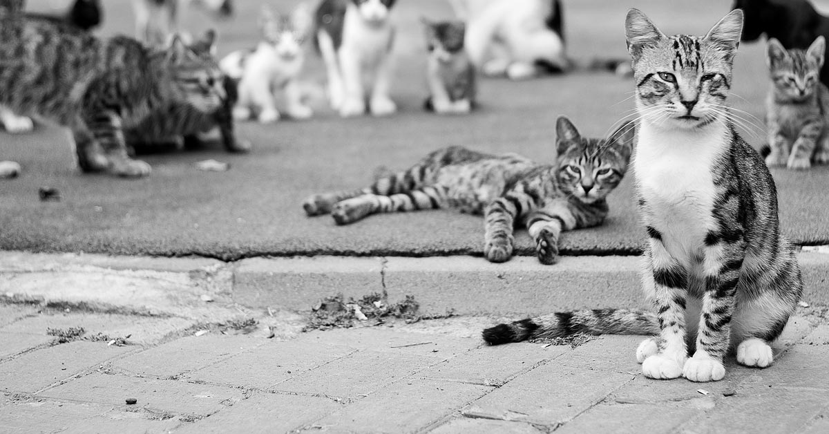 Improving Sales Conversions Is Like Herding Cats