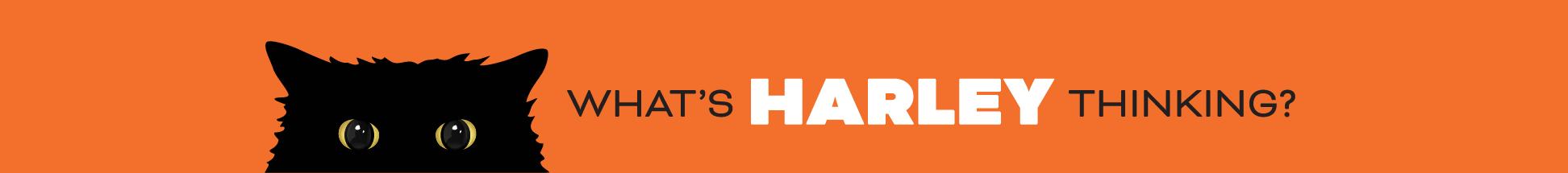 Harley Cat Header Web